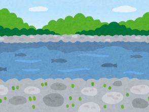 河川魚類調査を見学させていただきました(投稿者:多田)